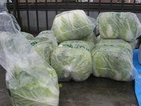 白菜の山.jpg