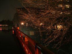 中橋ライトアップ左.jpg