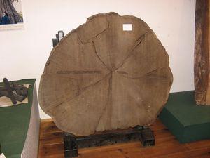 樹齢400年.jpg
